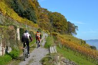Mountain Bike tour of Lake Constance